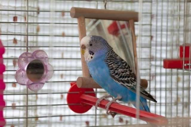 Things to Keep Your Bird Cage Clean