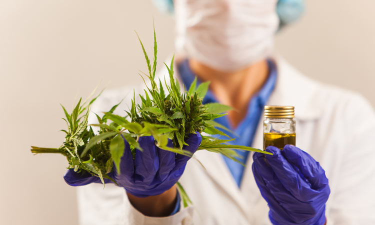 What Are the Medical Pros And Cons of Taking Cannabis