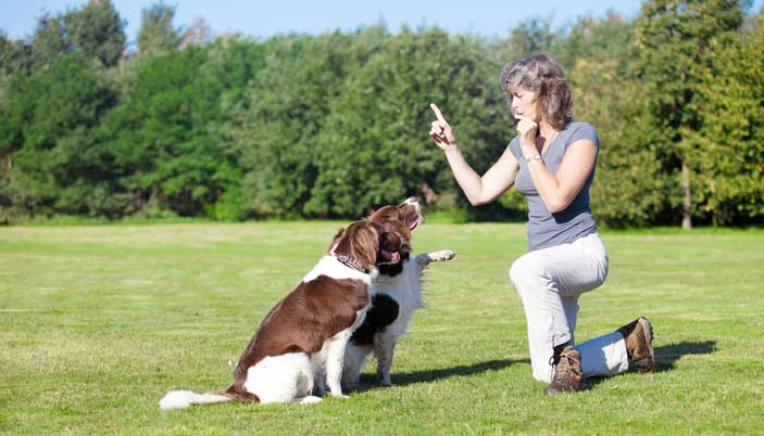 Know About The Whistle For Training The Dog