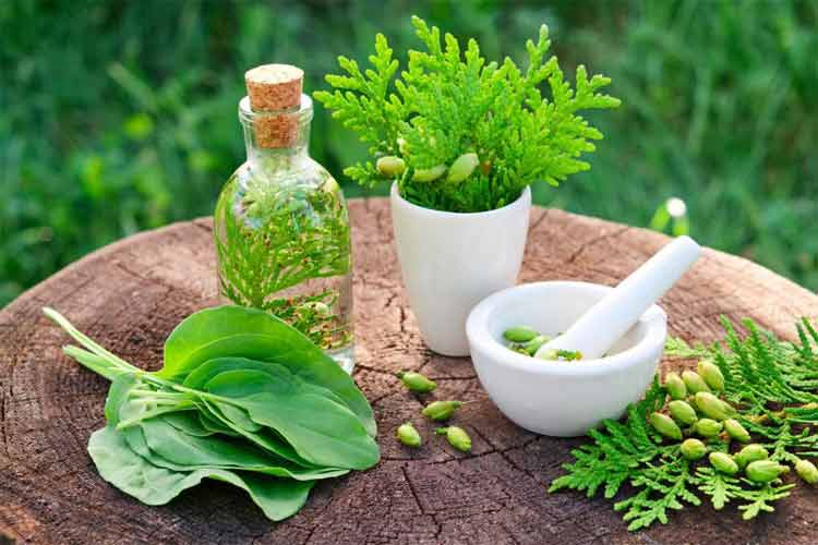 The Role of Online Herbal Medicine Pharmacy
