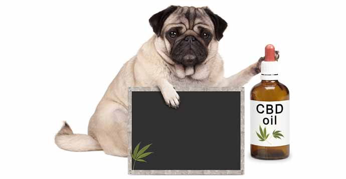What Can CBD Oil Do For Pets